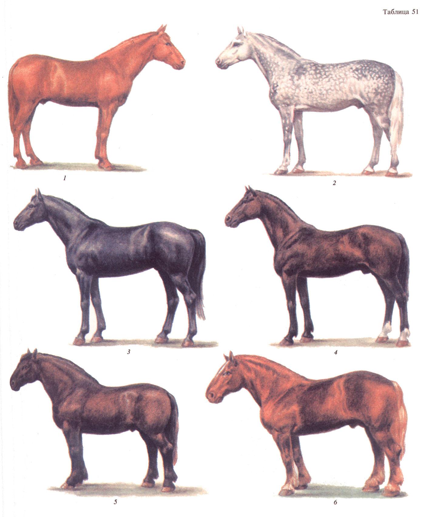 Лошадей селекция