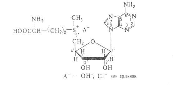 s-adenozil-1-metionin fogyás