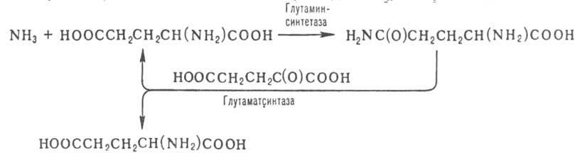 1115-41.jpg