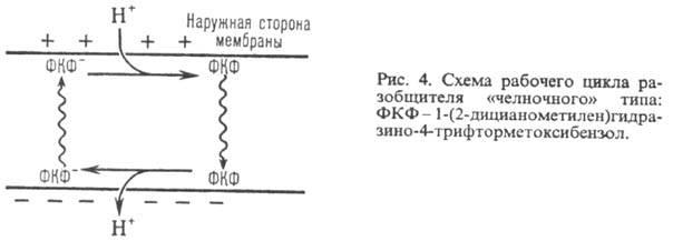 3505-4.jpg