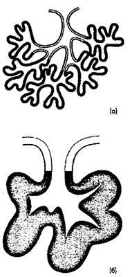 Рис. 8. Экзокринная железа(а) со сложной альвеолярно-трубчатой структурой(б) с разветвленной альвеолярной структурой