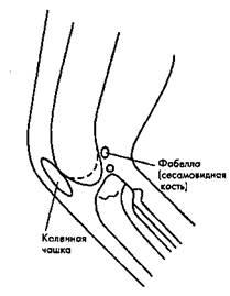 Рис. 13. Коленный сустав